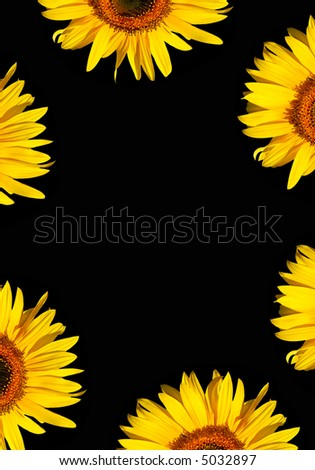 Sunflower flowerhead sections in full bloom creating a border, against a black background. - stock photo