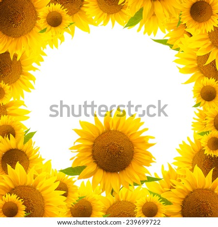 sunflower frame (border) isolated on white - stock photo