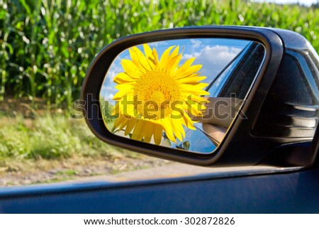 Sunflower Car Stock Images Royalty Free Images Vectors