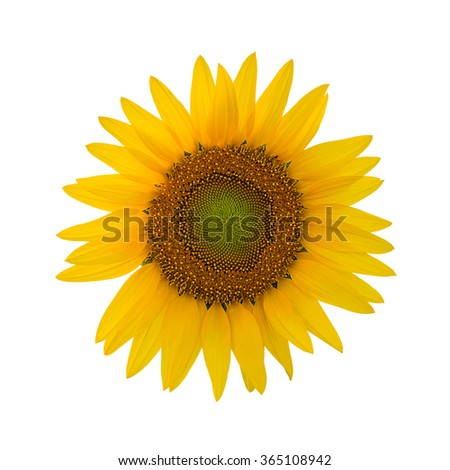 Sunflower isolated on white background with clipping path.