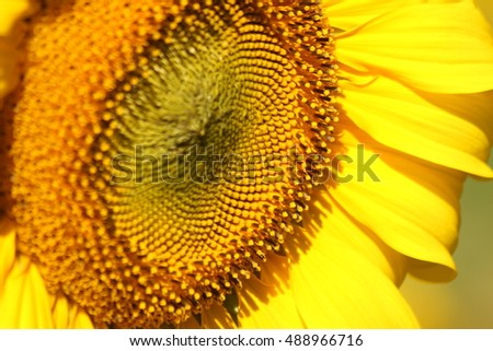 business idea of sunflower oil production