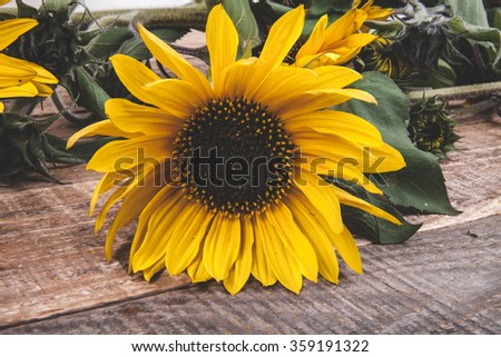 sunflower on a wooden background