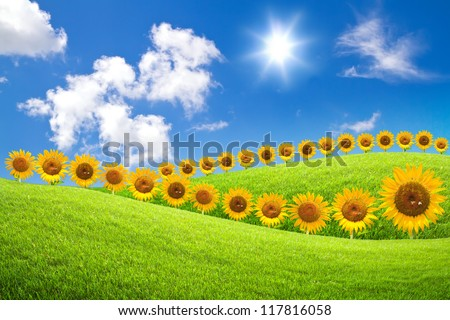 Sunflower  on green grass and blue sky