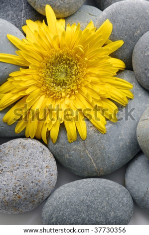Sunflower on  pebbles at the beach