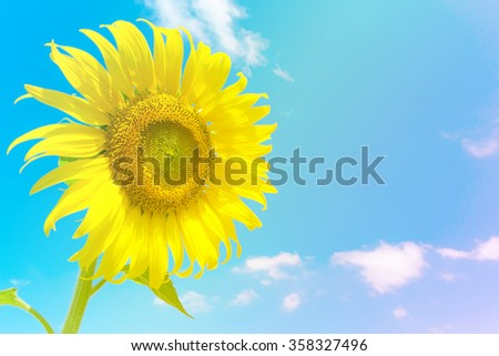 Sunflower over cloudy blue sky and bright sun lights made with pastel color. - stock photo