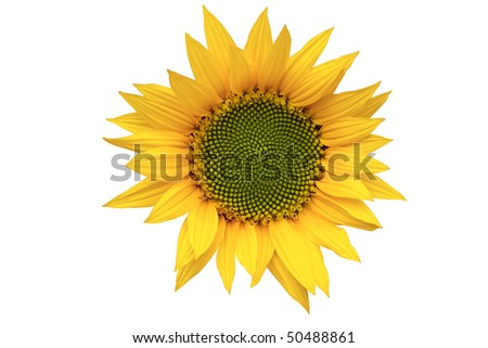 sunflower represents peace hope...