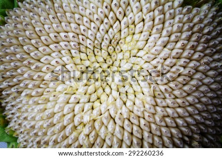 Sunflower seed pattern - stock photo