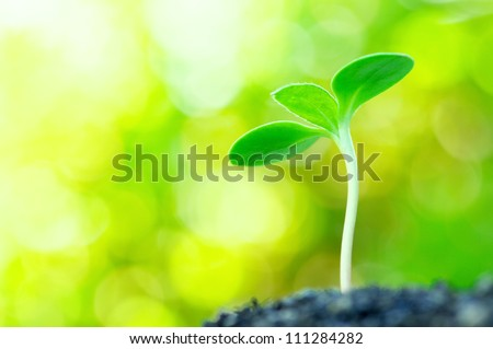 Sunflower sprout on yellow bokeh background.(horizontal) - stock photo