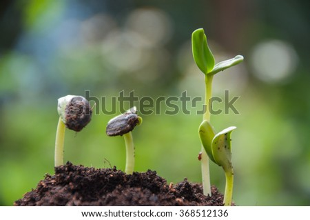 Sunflower sprouts growing on soil with green nature background