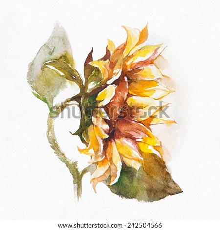 Sunflower.Watercolor painting on white background. - stock photo