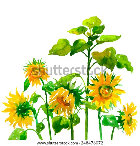 Sunflower watercolor raster illustration on isolated background - stock photo