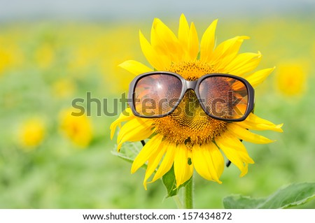 Sunflower wearing sunglasses  - stock photo