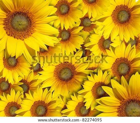 sunflower with background