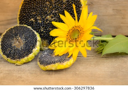Sunflower with sunflower seeds on wooden texture, yellow toning