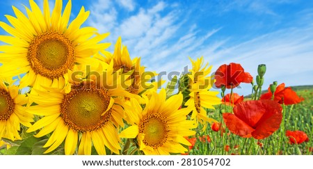 sunflowers and poppies - stock photo
