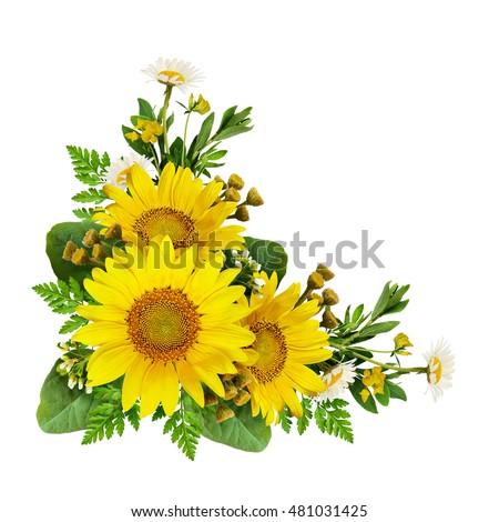 Sunflowers Wild Flowers Corner Arrangement Isolated Stock ...