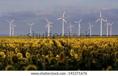 Sunflowers and wind generators at the field in summer