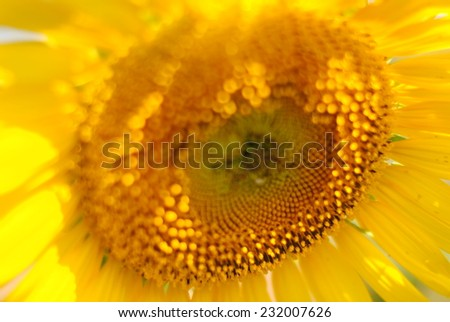 sunflowers flowers background green yellow nature - stock photo