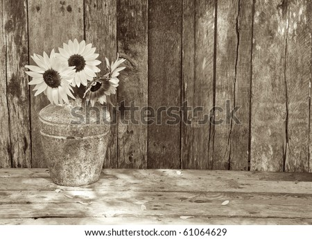 Sunflowers in the partial shade on a rustic, grunge background with copy space, sepia toned. - stock photo