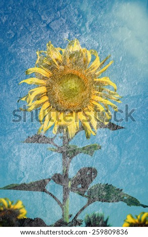 Sunflowers on a grunge background with vintage filter - stock photo