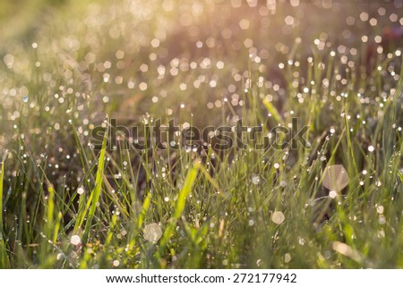sunlight and bright dew on green grass in summer morning blur - stock photo