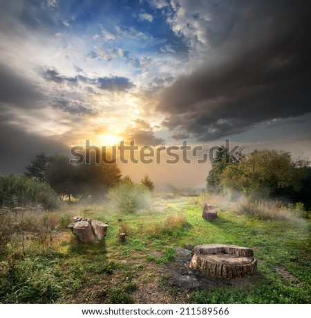 Sunlight and cloudy sky over the endangered forest and stumps - stock photo