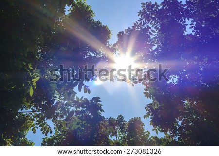 Sunlight and lens flare,tree leaves - stock photo