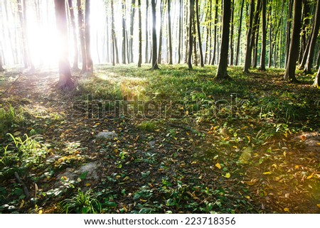 Sunlight falls on the rural road in the misty autumnal forest. Photo taken in September. - stock photo