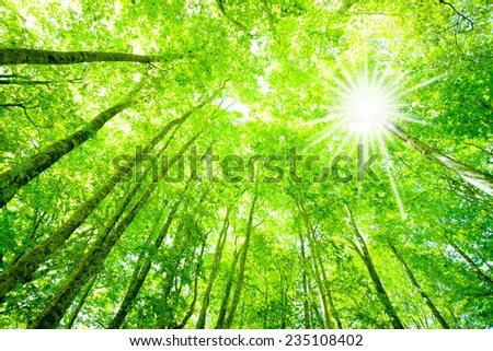 Sunlight filtering through trees and freshly green beech trees - stock photo