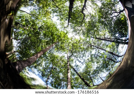 Sunlight filters through the canopy of a mangrove forest that grows in eastern Indonesia. Mangroves grow along tropical coastlines worldwide and are ecologically important. - stock photo
