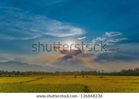 sunlight in a field - stock photo