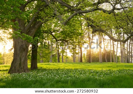 Sunlight in the green forest springtime - stock photo