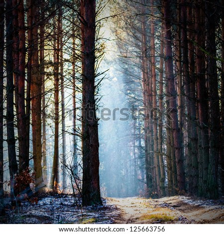 Sunlight in the grey forest, nature series - stock photo