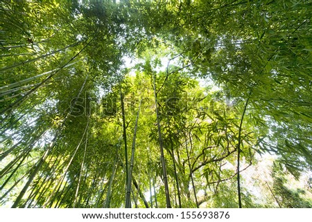 sunlight into bamboo forest perspective view  - stock photo