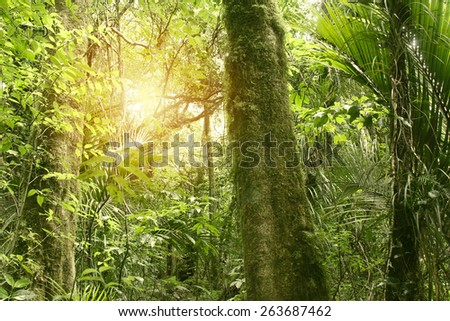 Sunlight shining in tropical jungle - stock photo