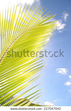 Sunlight shining though a palm tree leave against a blue sky - stock photo