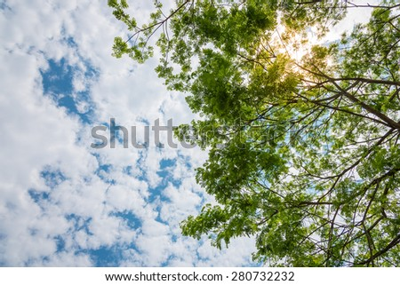 Sunlight shining through the trees - stock photo