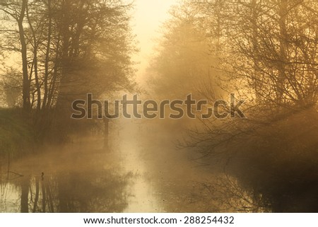 Sunlight shining through the trees along a small canal on a foggy, spring morning. - stock photo