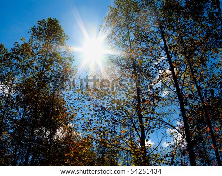 Sunlight Shining Through the Trees in the North Carolina Mountains - stock photo
