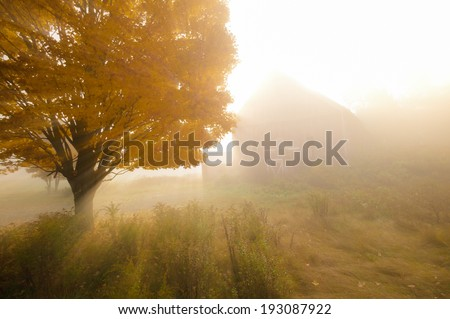 Sunlight streaking through foggy trees on an autumn morning with an old red barn in the background. - stock photo