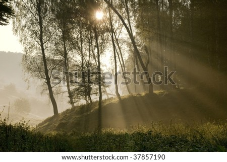 Sunlight through the trees and mist - stock photo