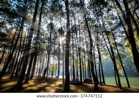 Sunlight with green forest, Pang ung,  Mae hong son, Thailand - stock photo