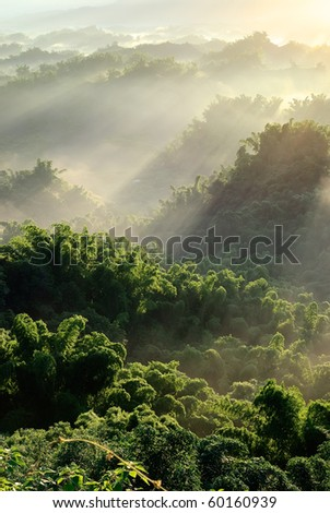 Sunlight with mist in forest, nature scenery with peace in Taiwan. - stock photo