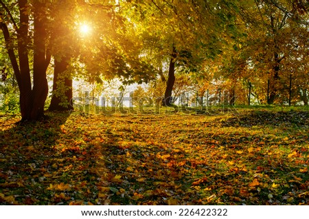 Sunlighted colorful foliage in the autumn park. - stock photo