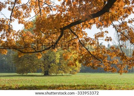 Sunlighted orange autumn tree in a park, Warsaw, Poland - stock photo