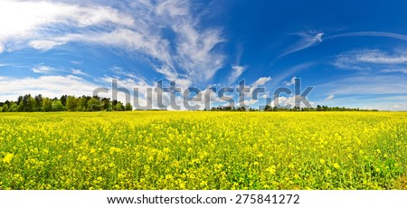 Sunlit field with bright yellow flowers under blue spring sky with picturesque cloudscape - stock photo