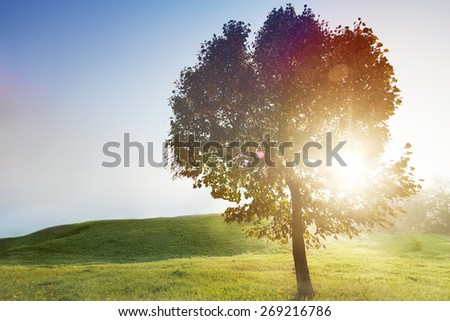 Sunlit Foggy Field with a Tree on Clearing - stock photo