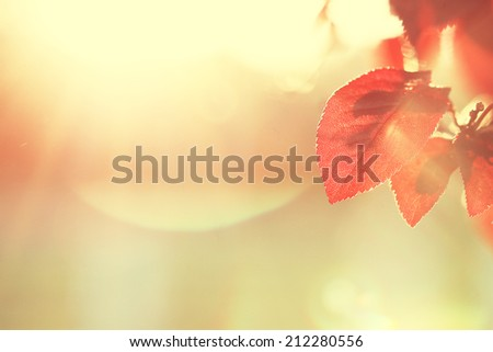 sunny autumn background - stock photo