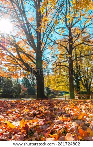 Sunny Autumn day. Lens flare. - stock photo