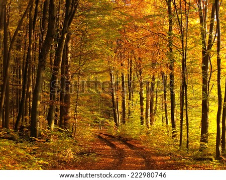 sunny autumn forest road - stock photo
